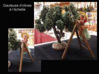 Gauleuse d'olives sur l'échelle